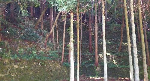 http://fuushi.k-pj.info/jpgj/simane/izumo/taki-t/tagi/kanayago/kanayago-a.jpg