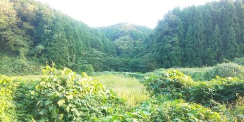 https://fuushi.k-pj.info/jpgk/shimane/oohara/unnan-c/daitou-t/Mayou/Mayou-a01.jpg